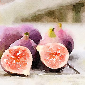 watercolor figs waterlogged