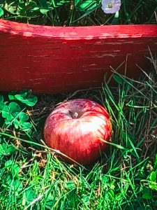 single apples on grass by red chair